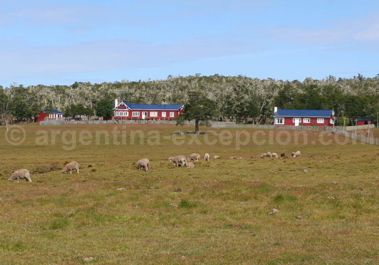 Estancia en Terre de Feu, Patagonie