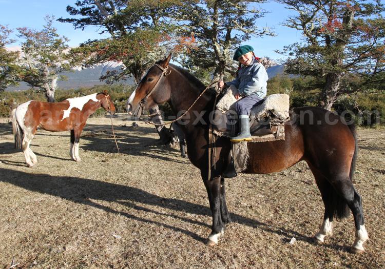 Cheval créole, estancia Tres Valles