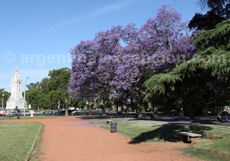 Jacarandas à Buenos Aires