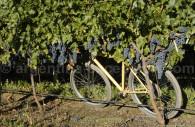 Vignes de Mendoza, bodegaTapiz