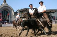 exposition equine nuestros caballos