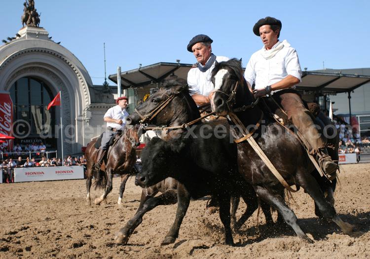 Exposition équine Nuestros caballos