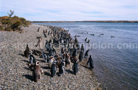 parc isla pinguino