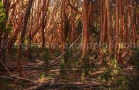 parc national arrayanes