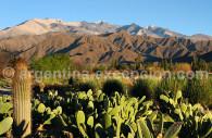 Los Cardones park, Salta