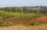 plantations mate