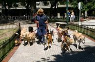 promeneur chiens argentine