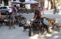 Promeneur de chiens, un métier commun à Buenos Aires