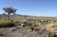Reserva Ñacuñán