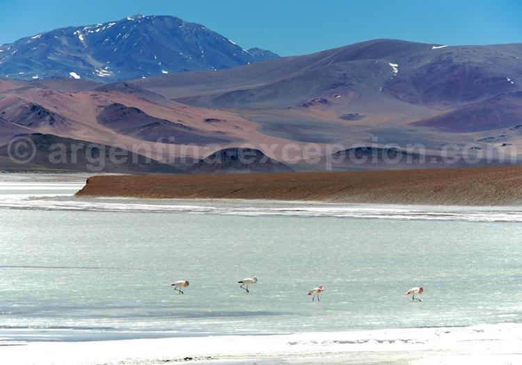 reserve provinciale laguna brava