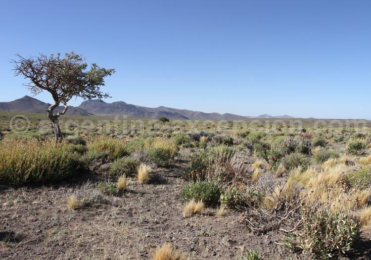 Réserve de biosphère Nacuñan