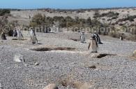 reserve provinciale punta tombo argentine