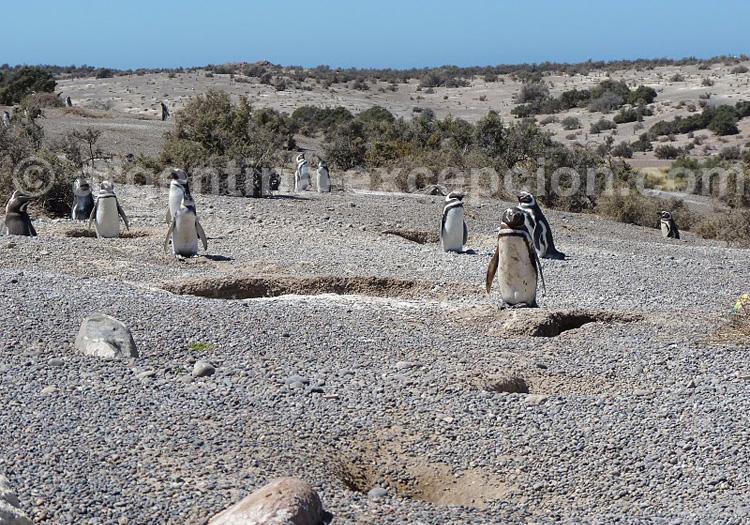Reserve provinciale Punta Tombo. Credit Jean Dudouyt