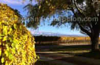 Wine road, Mendoza province