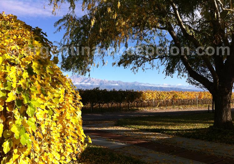 Route des vins, région Mendoza