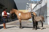 salon du cheval buenos aires