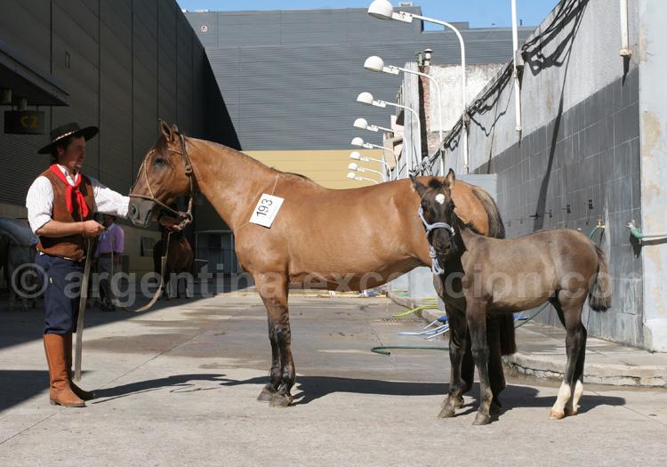 Salon du cheval, Buenos Aires