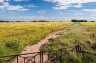 Cultivo de soja, Argentina