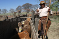 travail du betail estancia pampa grande argentine