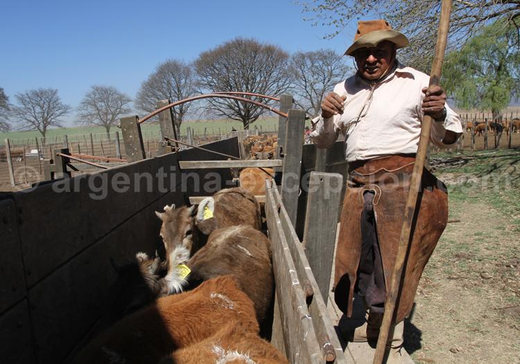 Travail du bétail, estancia Pampa Grande