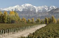 bodega terrazas de los andes argentine