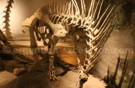 Dinosaure Amargasaurus