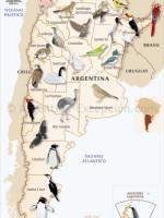 Aves en Argentina