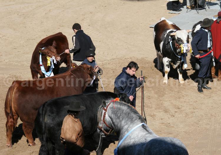 Campo, Argentine, La Rural avec Argentina Excepción
