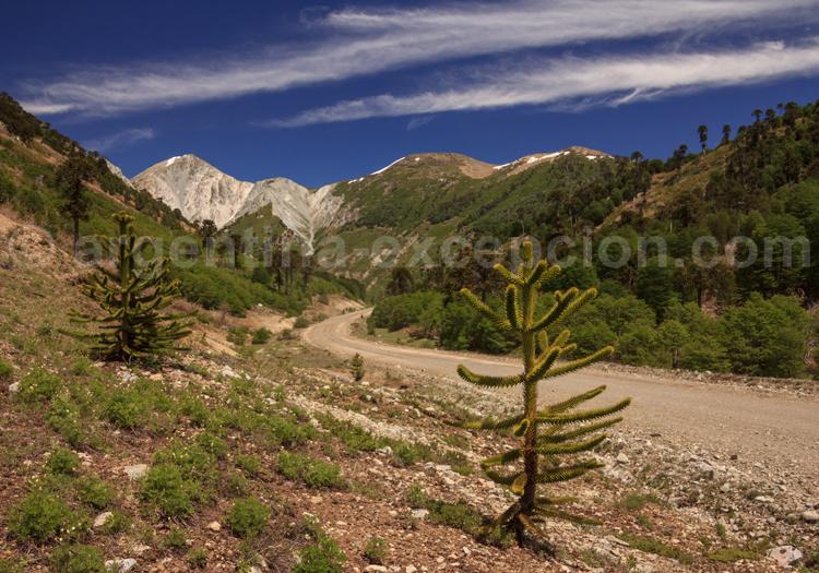 Cerro Impodi, Route n°13