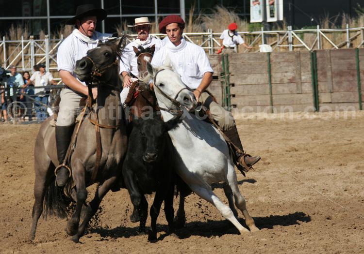 Démo nuestros caballos avec Argentina Excepción