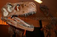Fosil de dinosaurio