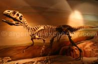 Esqueleto de dinosaurio