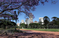 A l'ombre des jacarandas, Buenos Aires