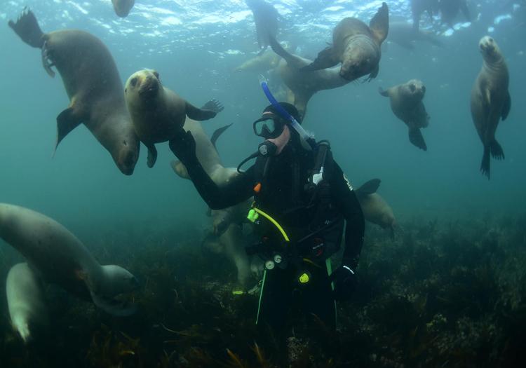 Plongée avec les lions de mer, Patagonie