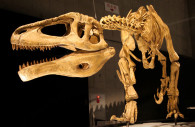 Dinosaurio Megaraptor