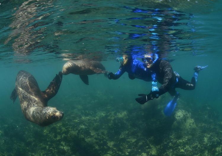 Plongée avec les lions de mer, réserve de Punta Loma
