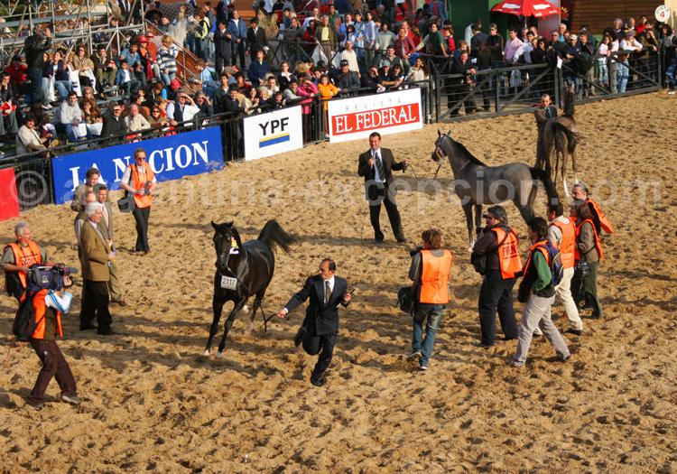 Salon du cheval - Nuestros Caballos avec Argentina Excepción