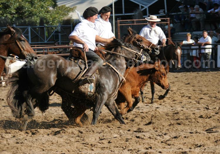 Salon cheval, La Rural, Buenos Aires avec Argentina Excepción