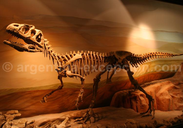 Epachtosaurus sciuttoi, musée de Trelew