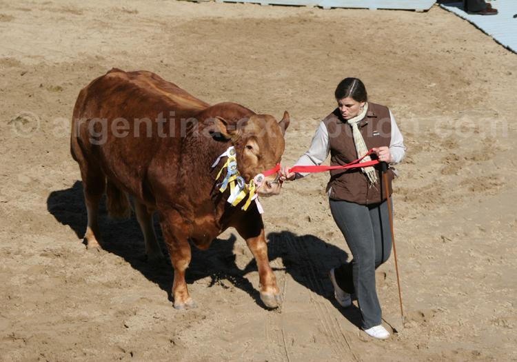 Taureau Argentine, La rural, avec Argentina Excepción