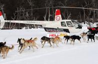 Retour à Ushuaia en traineau à chiens