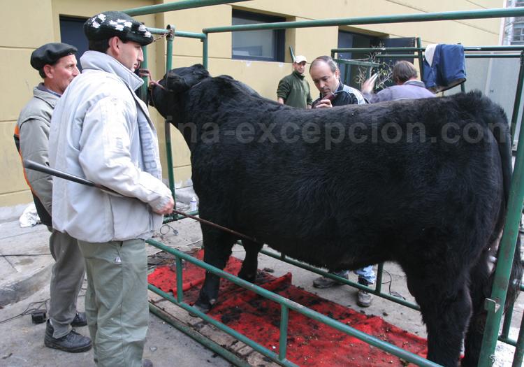 Vache du Salon à Buenos Aires avec Argentina Excepción