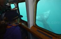 Vue depuis le Yellow Submarine