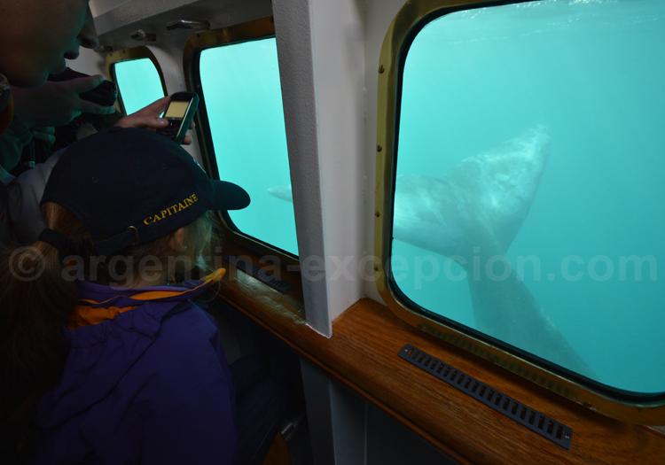 Baleine vue depuis le Yellow Submarine