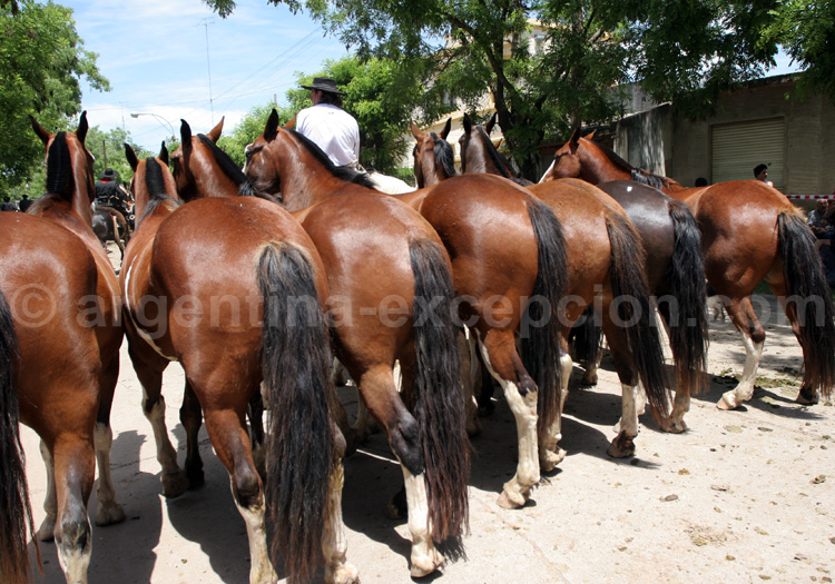 chevaux gauchos areco
