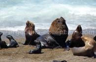 Observation de la faune, Péninsule Valdés