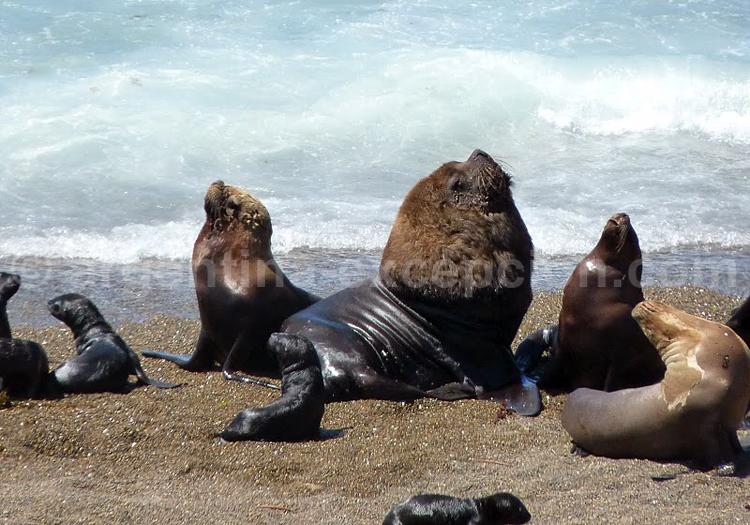 Safaris photographiques animaliers à Valdés