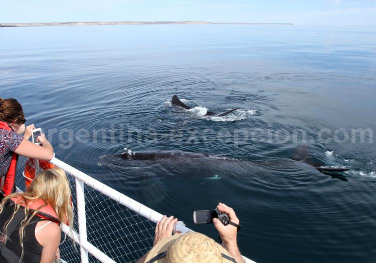 Exploration des baleines