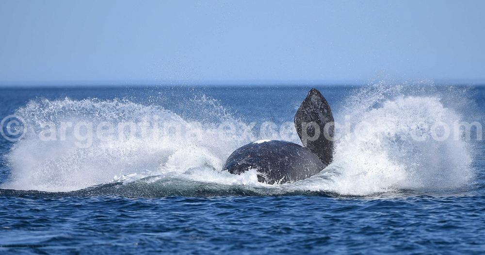 Le spectacle des baleines