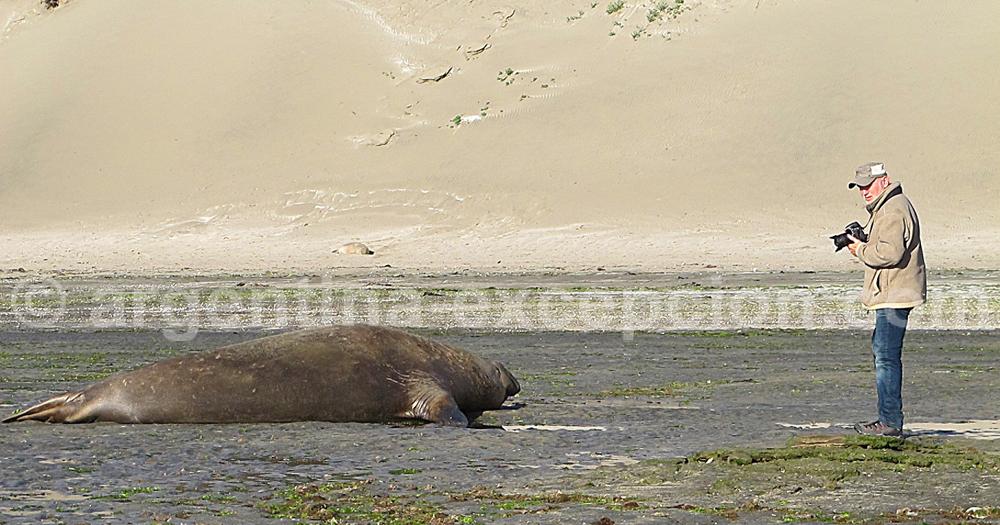 Séance photo avec les lions de mer